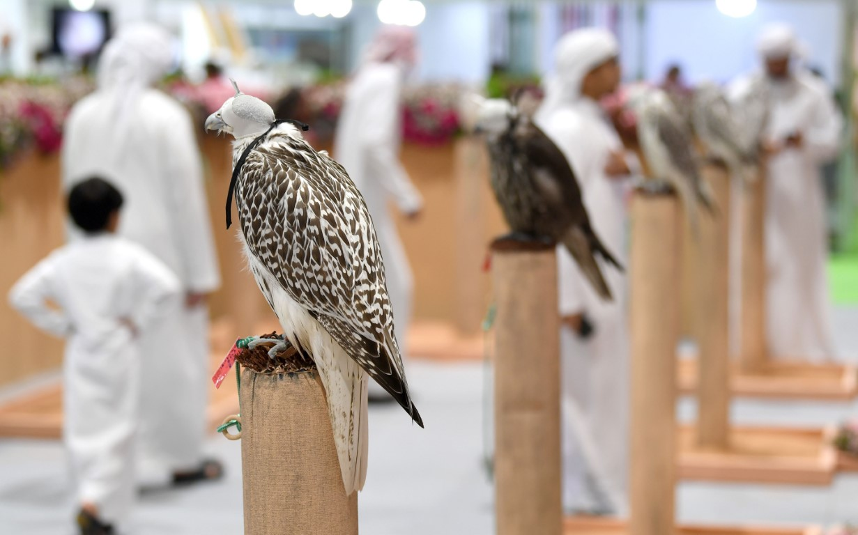 Captive-bred falcon competition to be organized at ADIHEX