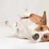 Λίγα λόγια για την παγκρεατίτιδα στον σκύλο