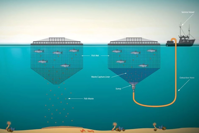 Tassal's salmon farming waste disposal system