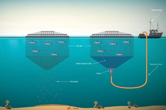 Tassal's salmon farming waste disposal system