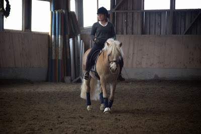 6 Things Every Horse Owner Should Have