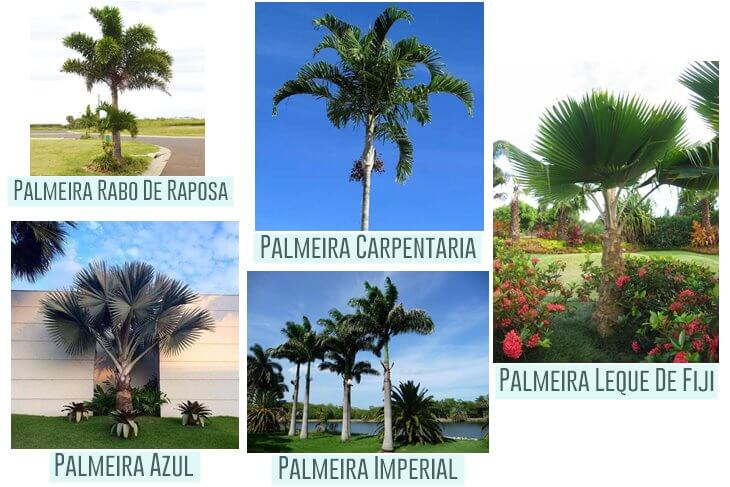 5-diferentes-tipos-de-palmeiras