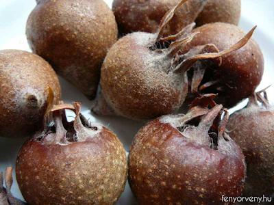 Naspolya: a sokoldalú gyümölcs