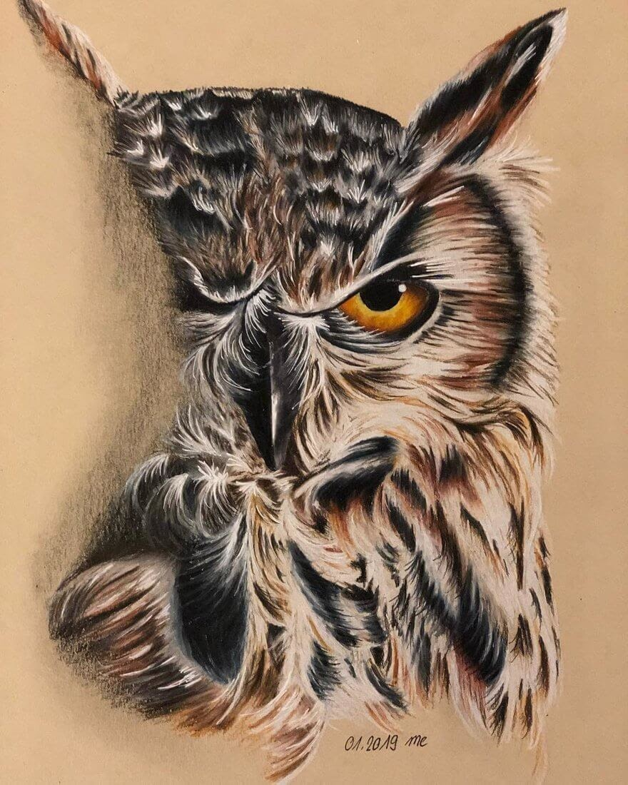 02-Owl-Eichenberger-Rodriguez-Colored-Wildlife-Drawings-www-designstack-co