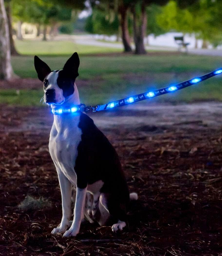 Led Dog Collar And Lead