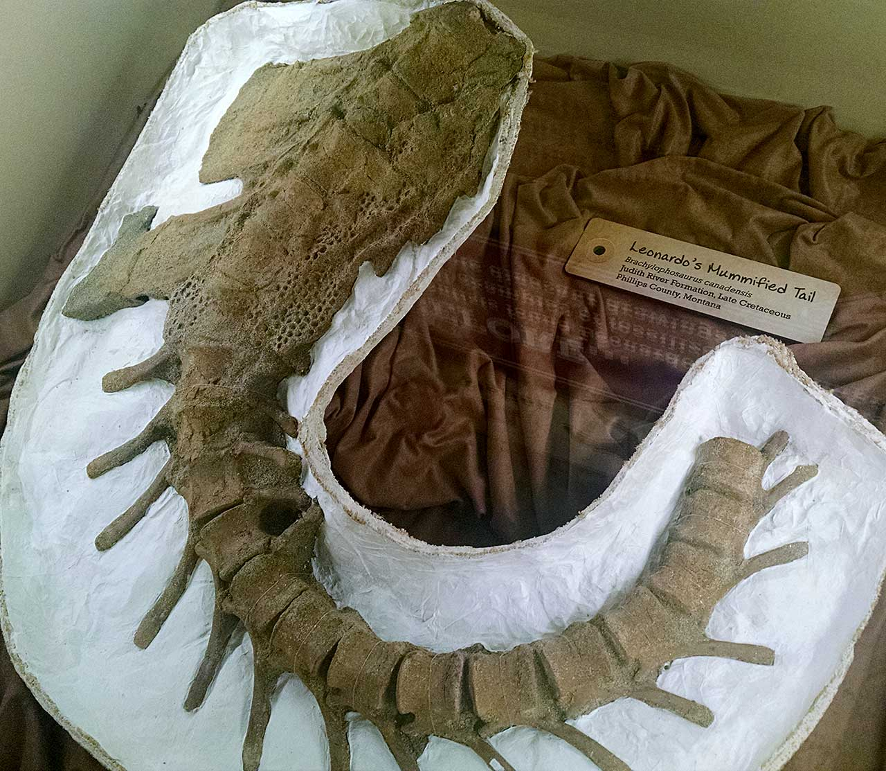 1280 x 1113 jpeg 203kBBrachylophosaurus
