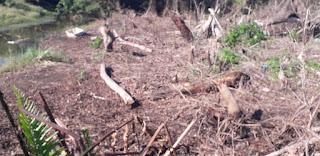 http://vnoticia.com.br/noticia/3900-policia-ambiental-flagra-ocupacao-irregular-e-desmatamento-em-santa-clara