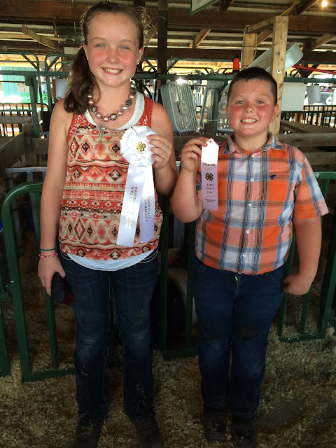 4-H, county fair, ribbons, showmanship, champion