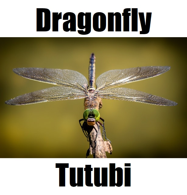 Dragonfly in Tagalog