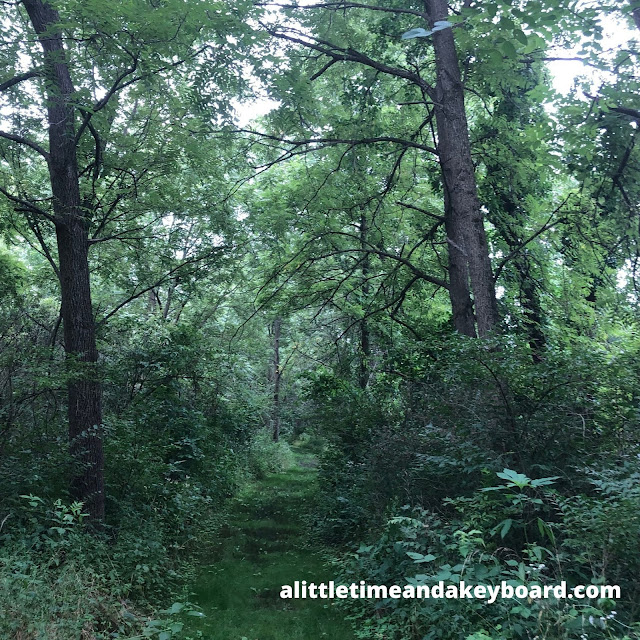 Wandering through the forest at Fox Bluff Conservation Area in Cary, Illinois