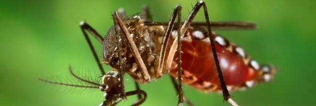Roncador em alerta contra a dengue!