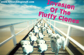 Invasion the Fluffy clones