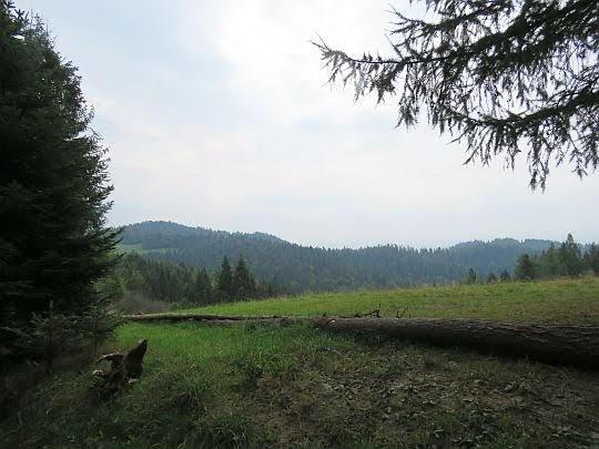 Za Przełęczą Knurowską.