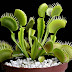 Carnivorous Venus Flytraps | Science Fact for Kids