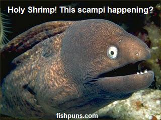 fishpuns.com+2.png