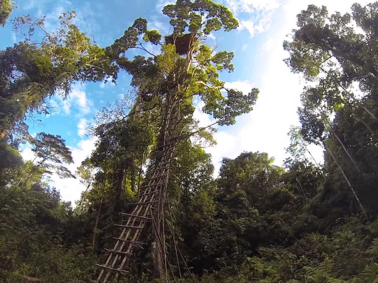casa en el árbol de gran altura vista desde abajo