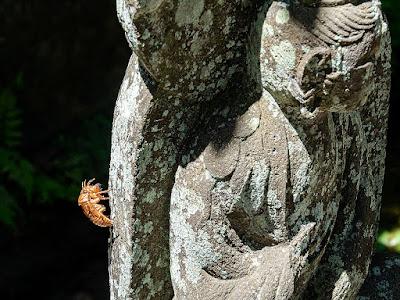 Cast‐off shell of a cicada_Engaku-ji