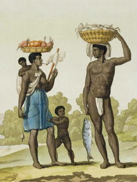 Ancestor rice of Suriname Maroons traced back to its African origin
