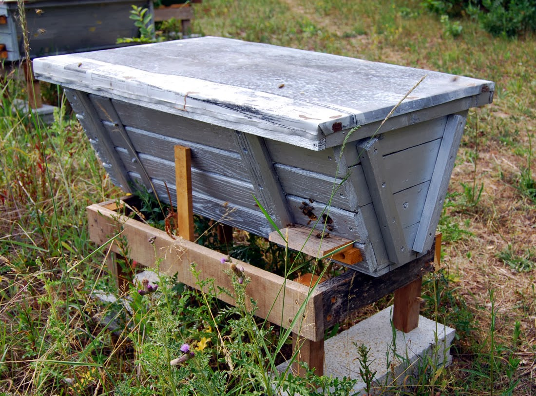 French wildlife and beekeeping: My Bee hives in France
