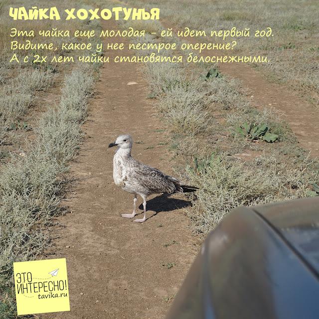 птицы Крыма