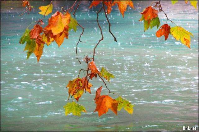 cơn mưa mùa Thu