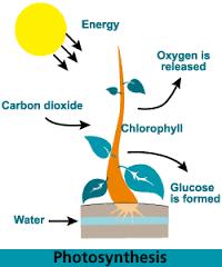 Permalink ke Pengertian Fotosintesis, Proses Serta Faktor – Faktor Yang Berperan Dalam Fotosintesis