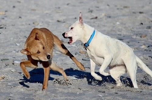 قوة عضة الكلاب ولماذا تعض