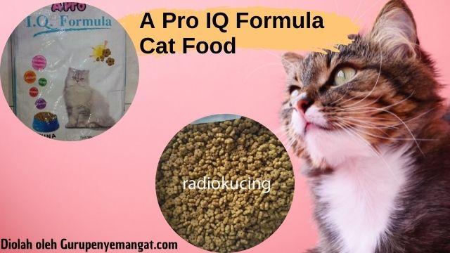 Pedekate dengan A Pro IQ Formula Cat Food, Apa Saja Kelebihannya untuk Si Meong