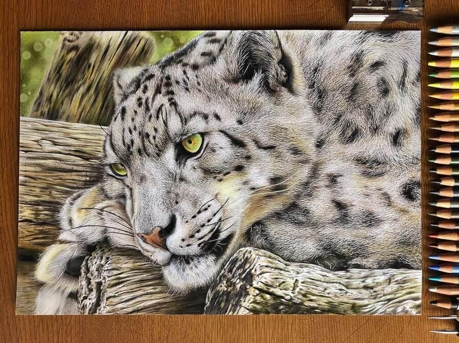 10-Snow-leopard-Haruki-Kudo-www-designstack-co