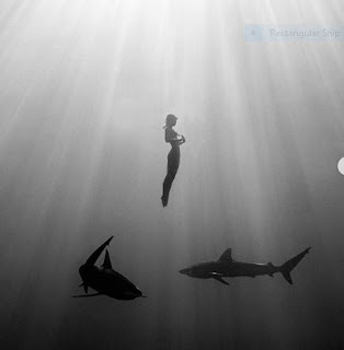 Model- jumped- bare- in- the- sea- with- a -shiver of sharks
