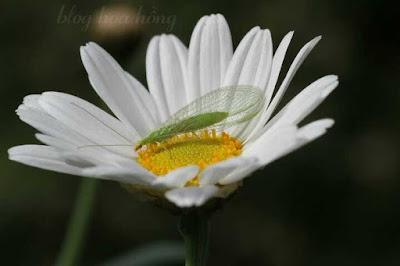 côn trùng ăn rệp