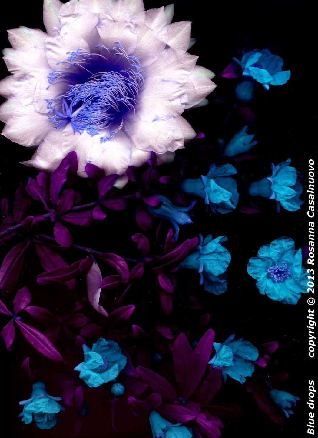 scannografia fiori melograno cactus manipolazione colori