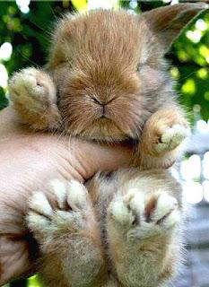 Big feet bunny