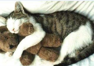 smiješna slika: mačka s lutkom