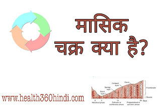 Menstrual Cycle in Hindi