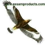 Eagle-Group