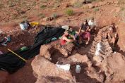 Ditemukan di Argentina, Fosil Tertua Titanosaurus