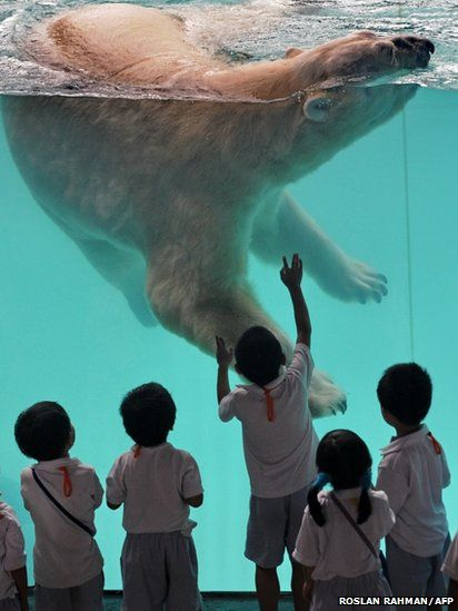 Top Rated Places to Visit in Singapore | A male polar bear at Singapore Zoo.