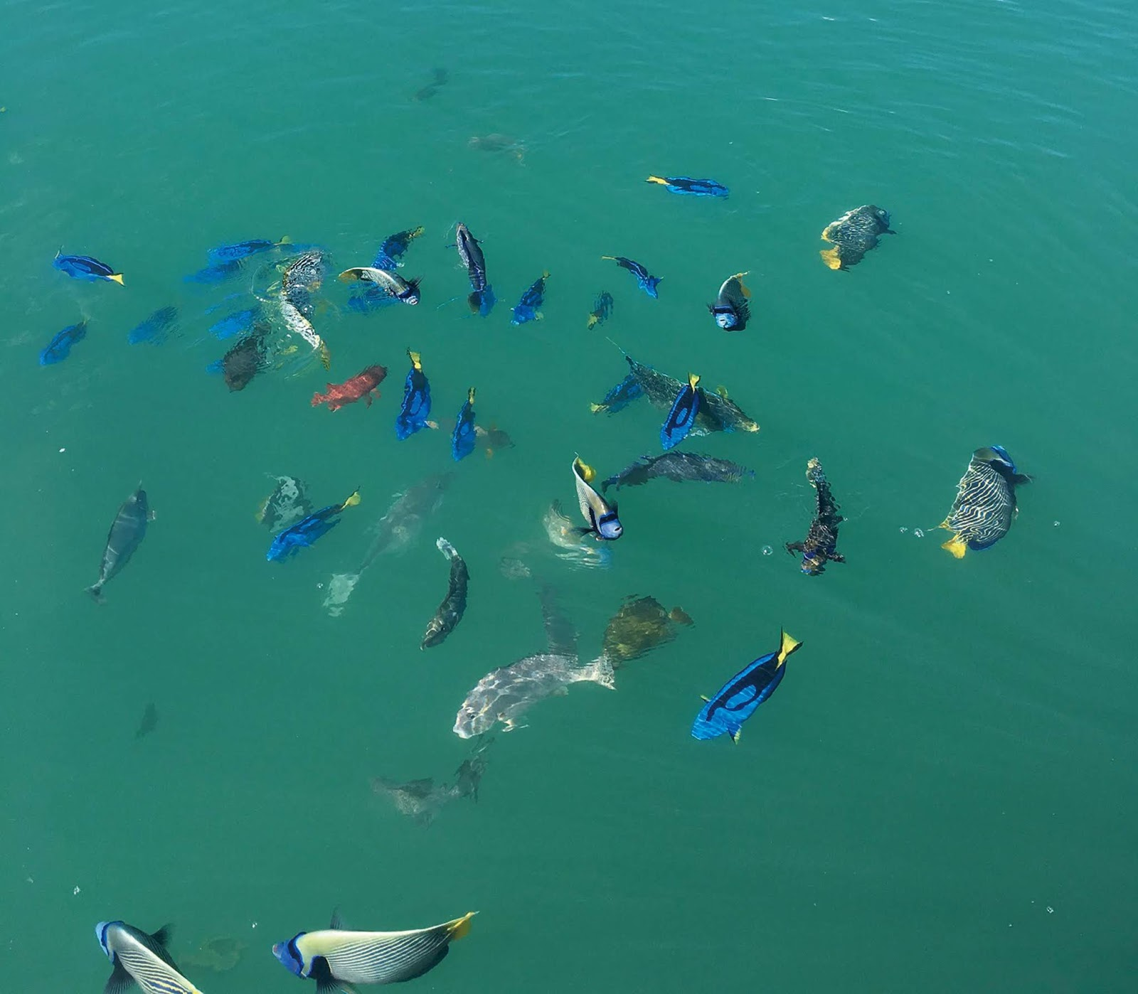 魚 怪 三 日本 大