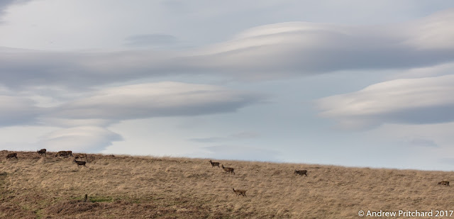 Multiple lenticular clouds above the deer, formed by winds blowing from the mountains to the north west.