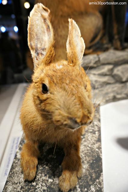 Animales en el Museo Extreme Mount Washington en el Sherman Adams Building