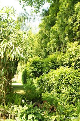 Area del Giardino di Villa Carlotta