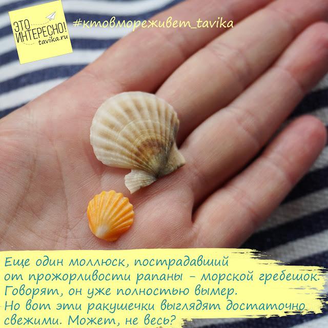 моллюски Тарханкута