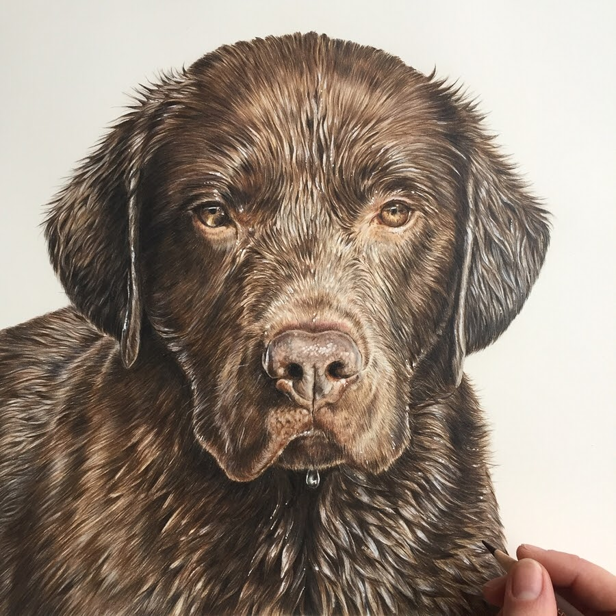 08-Wet-chocolate-labrador-Zoe-Fitchet-Pet-Portraits-Cats-and-Dogs-Drawings-www-designstack-co