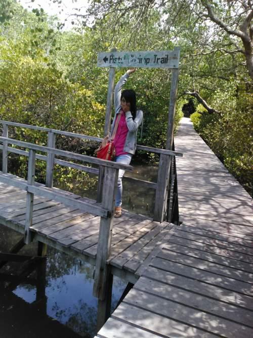 Objek Wisata Hutan Mangrove Di Kota Denpasar Bali Kurikulum