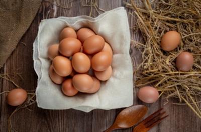 cara berbisnis telur ayam untuk pemula