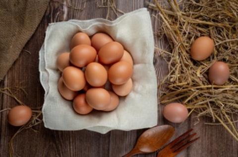 Memulai Bisnis Telur Ayam Dari Nol? Siapa Takut?