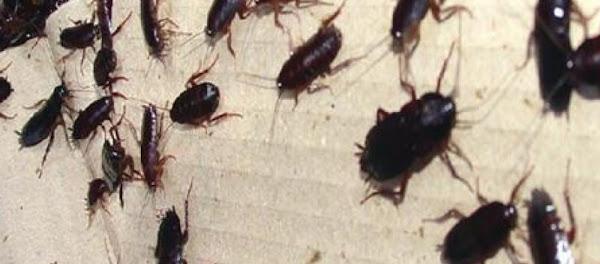 Εκατοντάδες κατσαρίδες στο υπόγειο του νοσοκομείου «Αλεξάνδρα» (βίντεο)