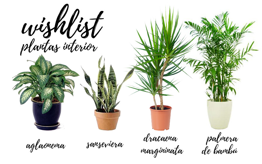 Regalame una planta for Cuales son las plantas para interiores
