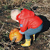 8 Top Tips for Pumpkin Picking